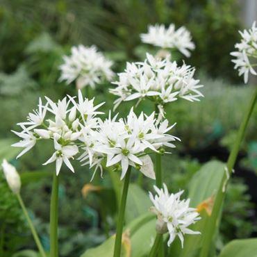 Eetbare Bloemen - Kruidenpakket