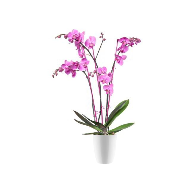 Elho Brussels diamond orchidee hoog 10,5cm  wit