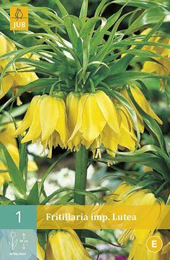 JUB Fritillaria imperialis 'Lutea' (1 stuk)