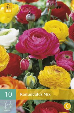 JUB Ranunculus mix (10 stuks)