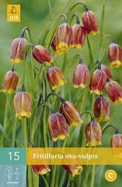 JUB Fritillaria uva-vulpis (15 stuks)