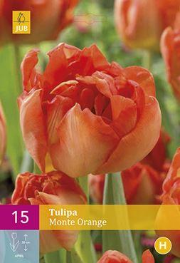 Tulipa 'Monte Orange' (15)