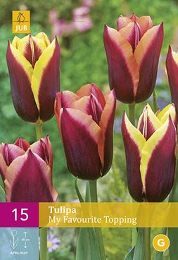 Tulipa 'My Favourite Topping' (15)