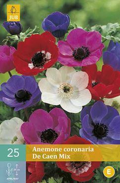 Anemone coronaria 'De Caen' mix (25 stuks)