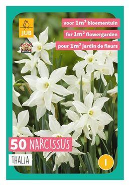 Narcissus triandrus 'Thalia' (50 stuks)