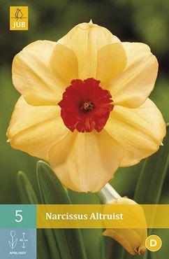 Narcissus 'Altruist' (5 stuks)