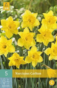 Narcissus 'Carlton' (5 stuks)