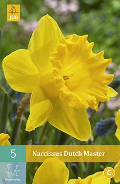 Narcissus 'Dutch Master' (5 stuks)