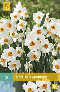 Narcissus 'Geranium' (5 stuks)