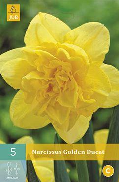 Narcissus 'Golden Ducat' (5 stuks)