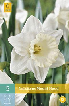 Narcissus 'Mount Hood' (5 stuks)