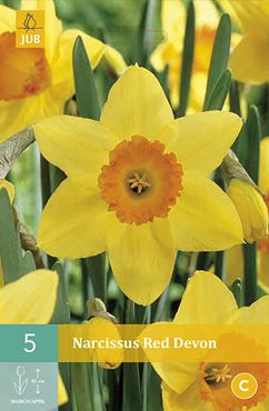 Narcissus 'Red Devon' (5 stuks)