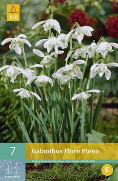 JUB Galanthus 'Flore Pleno' (7 stuks)