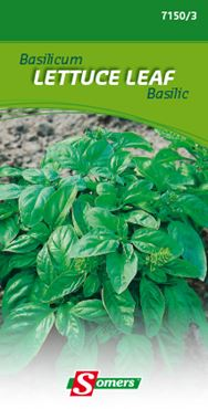Basilicum 'Lettuce leaf'