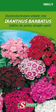 Somers Dianthus barbatus