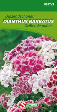 Somers Dianthus barbatus