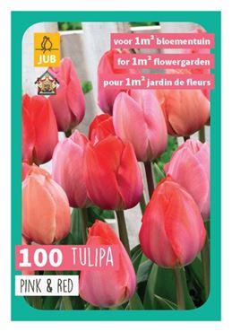 Bloembollenmix - Tulipa triumph roze/rood (100 stuks)
