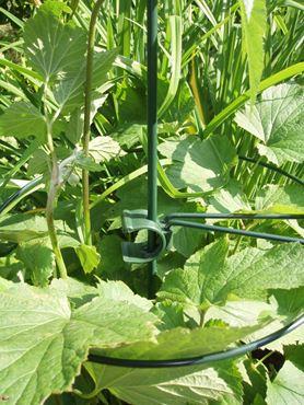 Plantensteun ring verzinkt/groen d 40cm