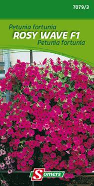 Petunia fortunia 'Rosy Wave f1'