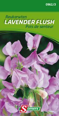 Lathyrus 'Lavender Flush'