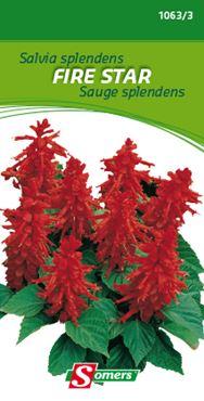 Somers Salvia splendens 'Fire Star'