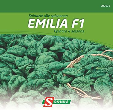 Spinazie 'Emilia f1'