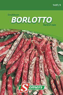 Struikboon 'Borlotto'