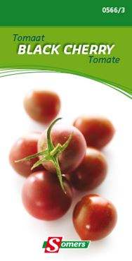 Tomaat 'Black cherry'