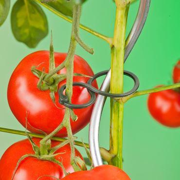 Tomatenplantringen d65mm