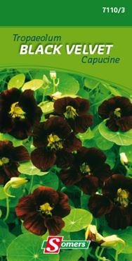 Tropaeolum black velvet
