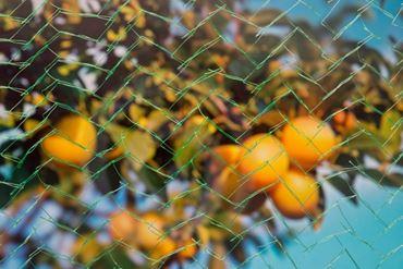 Nature Fruitboomnet mono 8x8 m