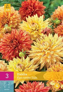 Dahlia 'Favourite Sun' (3 stuk)